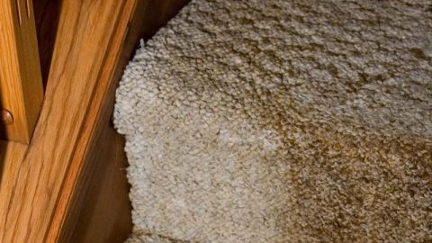 Repairing Your Carpeting and Floors after a Fire