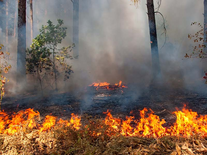 brush fire summer duckstein restoration