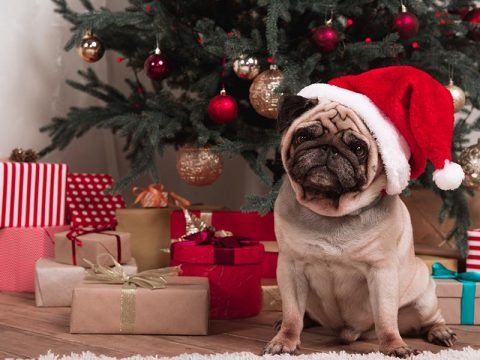 Protect Your Pets This Holiday Season
