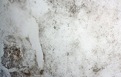 mold growth basement moisture
