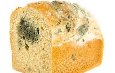 mold growth bread