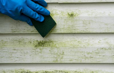 mold growth outdoor elements