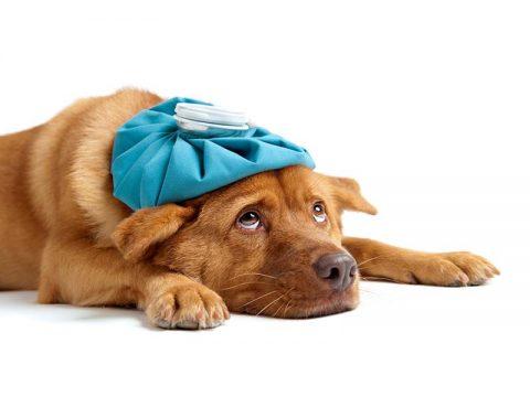Understanding Mold Sensitivity in Pets