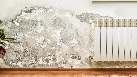 Restoration Science: What Are the Dangers of Mold?