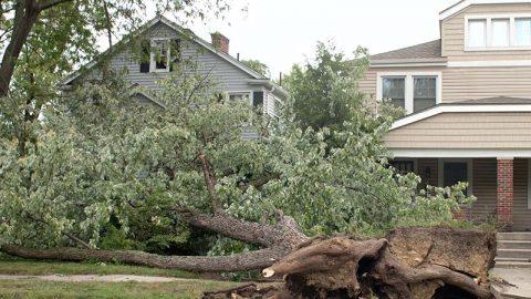 Fallen Trees—A Common Western PA Hazard